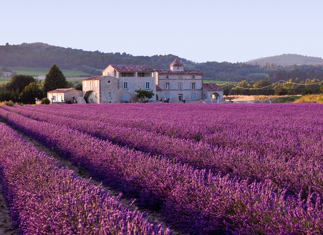 Nathalie-Sewell - 23.7.13 Lavender_field.jpg - commons.wikimedia.org