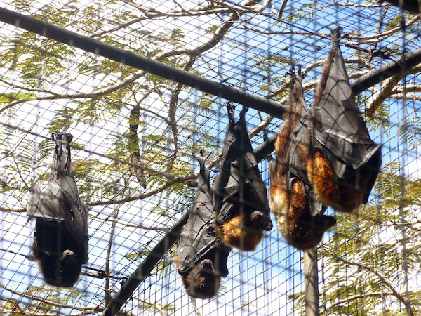 Bats - Rahcelle Burgoyne - My French Life™