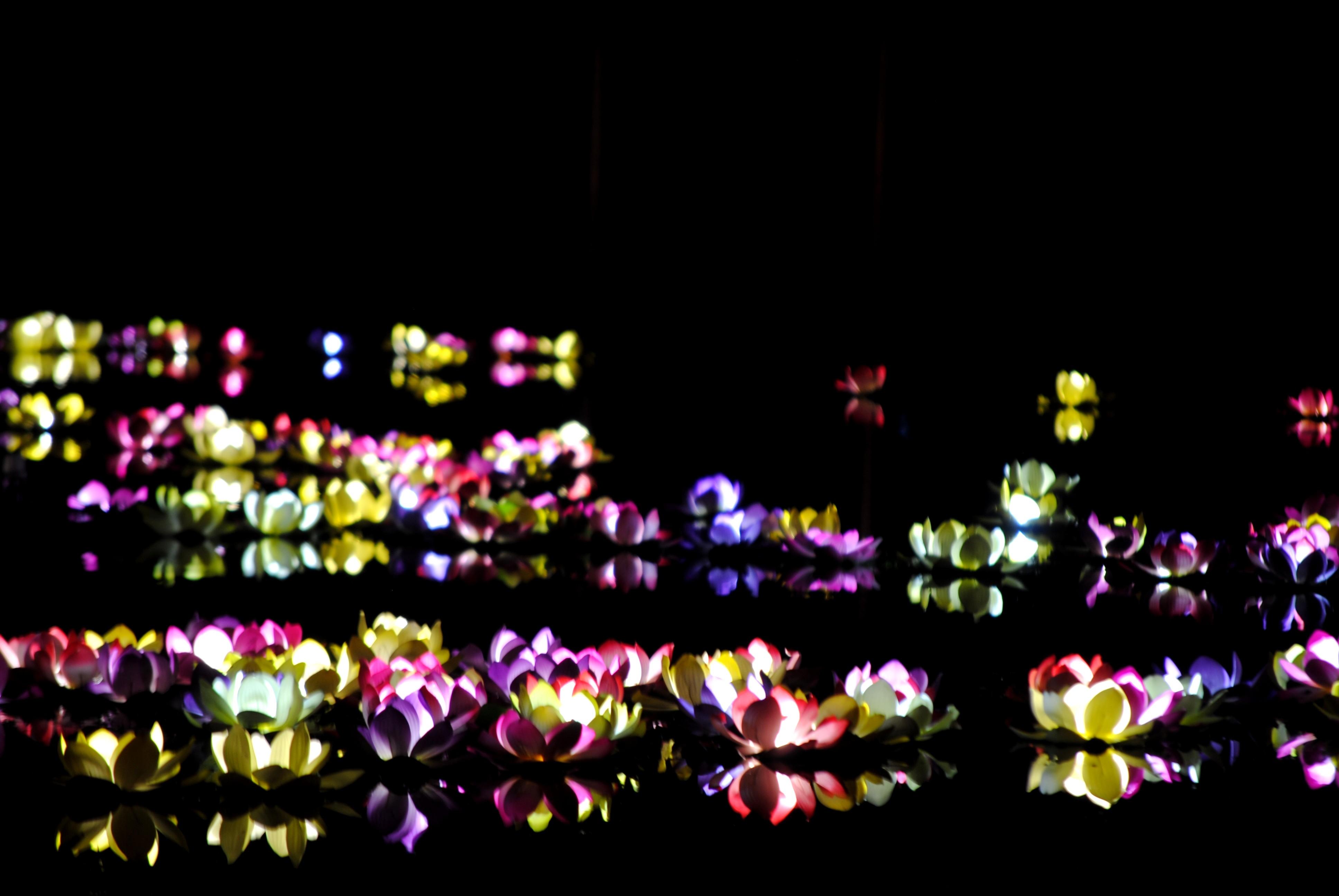 Jess Gregory - 08.01.14 - www.MyFrenchLife.org