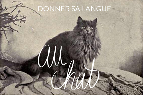 Donner sa langue au chat - Favourite french idioms - language - MyFrenchLife
