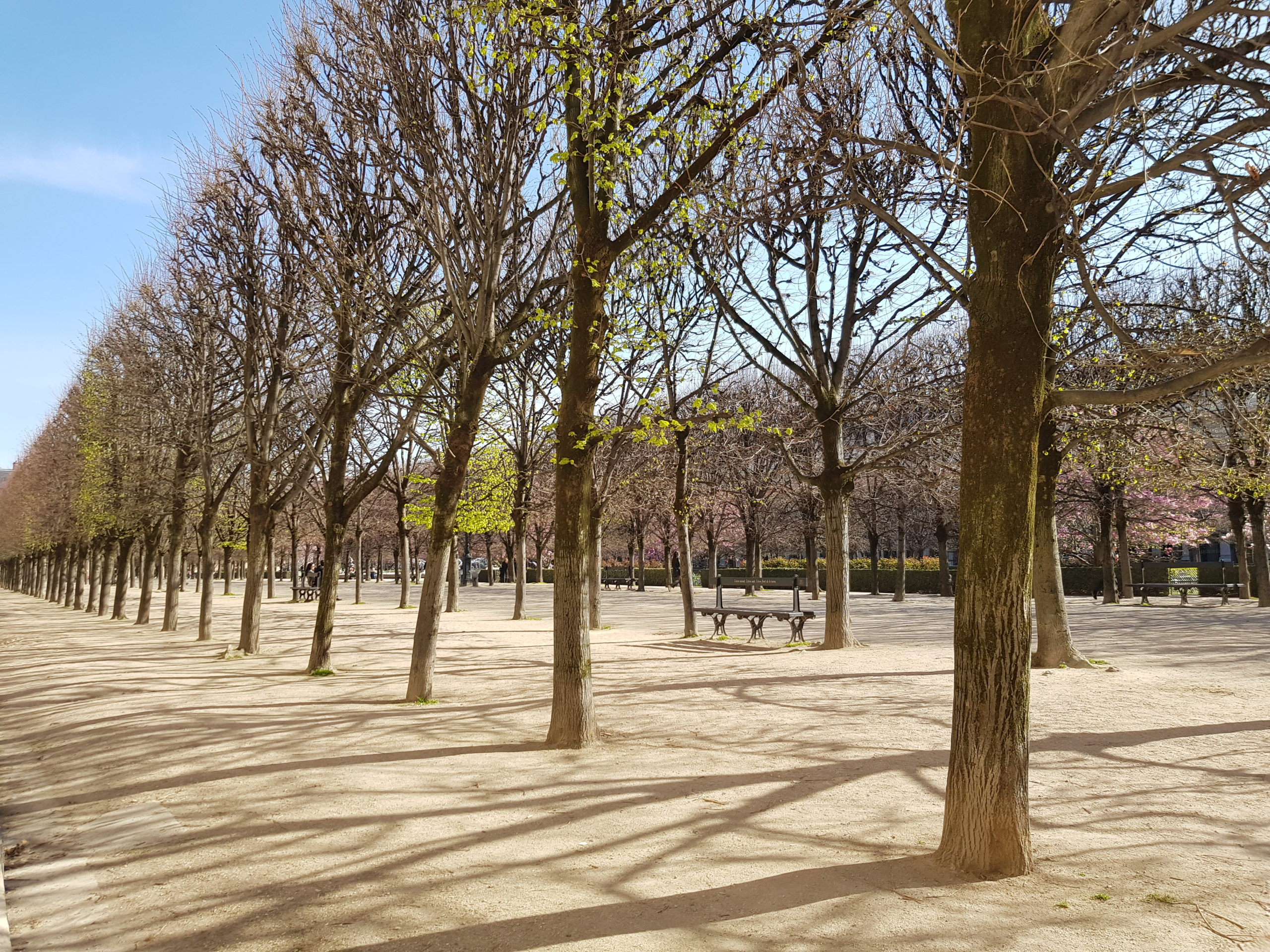 Palais-Royal - Poetry - MyFrenchLife.org