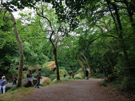 Experience Brittany Forests - Forest Bathing 2 - MyFrenchLife.org