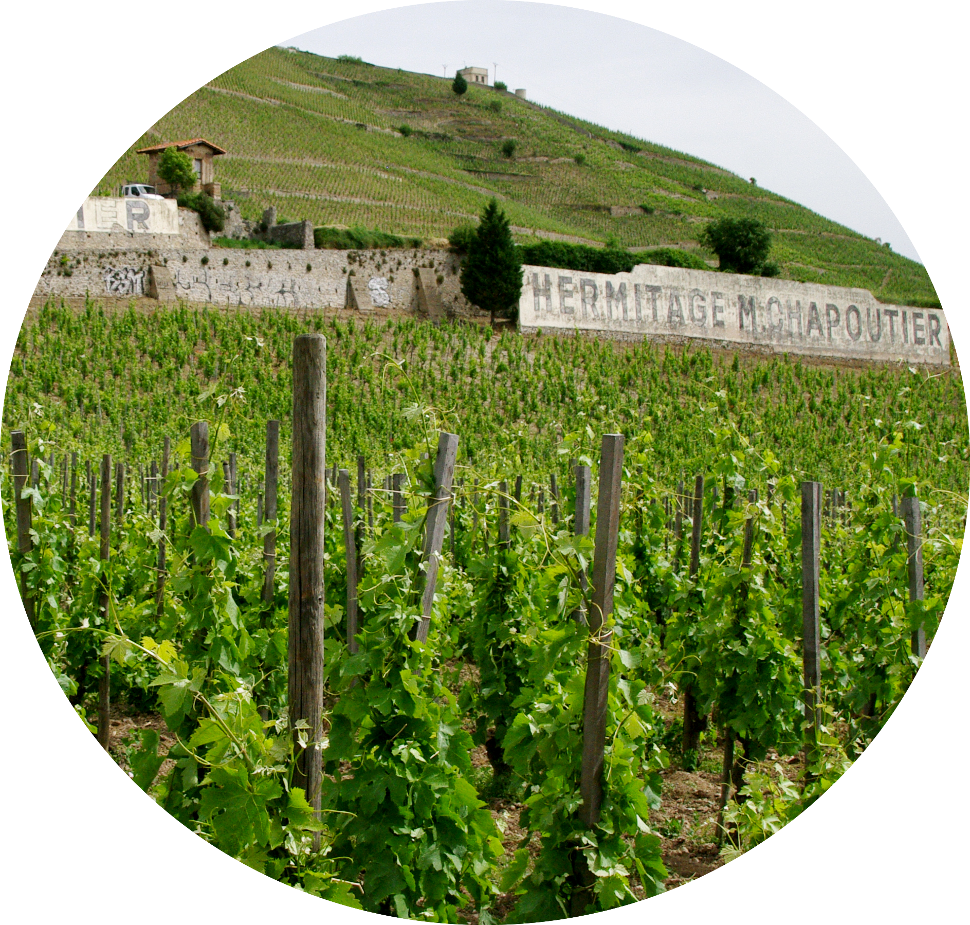 MyFrenchLife™ - Off the beaten track in France Rhone Alpes - vineyard