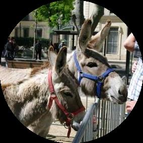 Janelle_Gould_-_Nîmes_-_Donkeys-_My_French_Life™.JPG