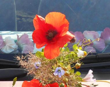 MyFrenchLife™ – MyFrenchLife.org - Brexit - Somme - Poppys - Altar - Remembrance