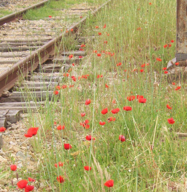 MyFrenchLife™ - MyFrenchLife.org - Exploring Provence - Jan Leishman - World War One - poppies along train line