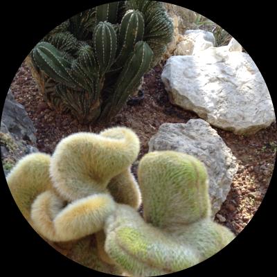 Ronnie_Hess-French_Mediterranean_Gardens_3-e-MyFrenchLife™