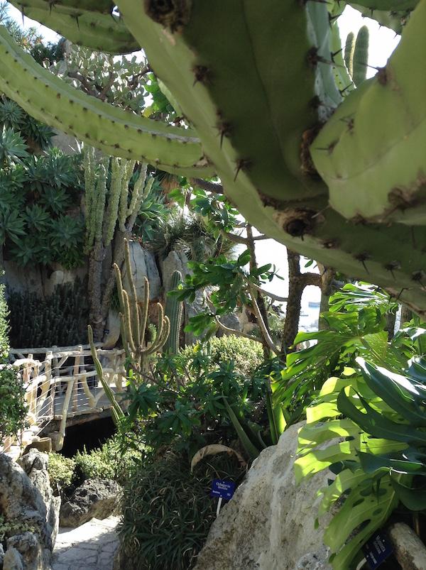 Ronnie_Hess-French_Mediterranean_Gardens_3-f-MyFrenchLife™