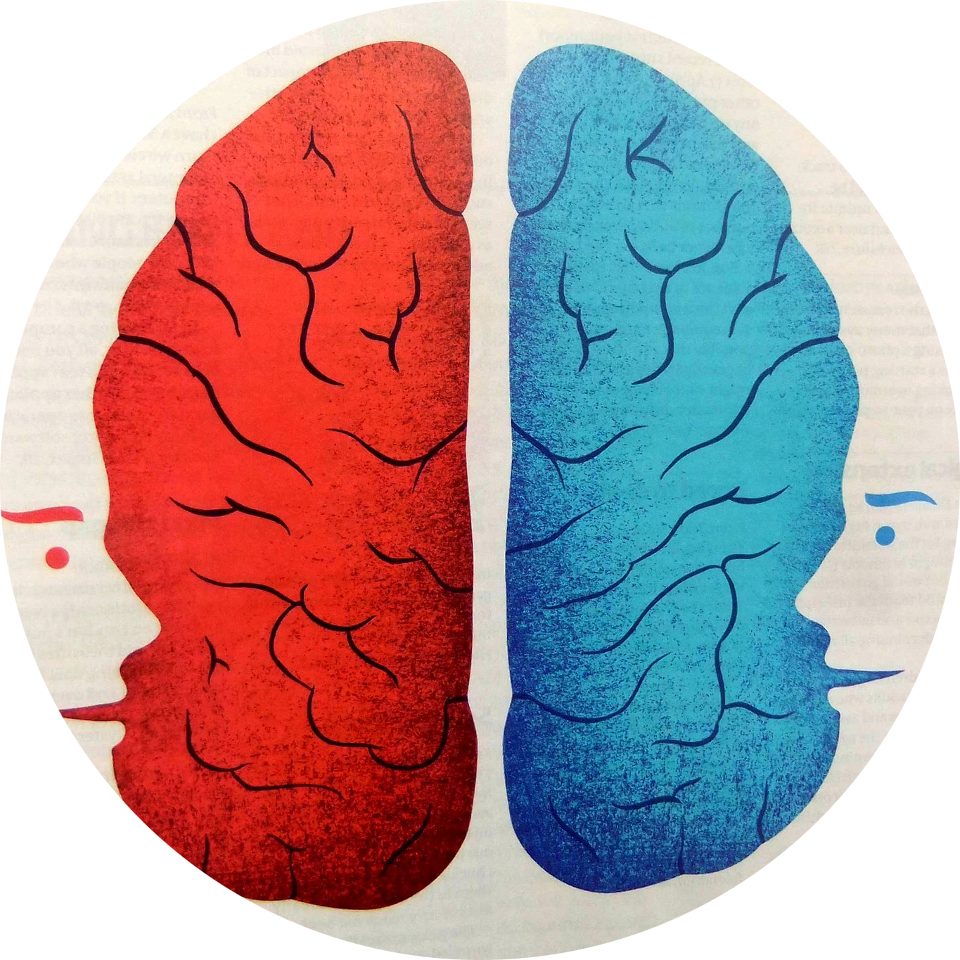 brain - The mechanics of learning French - how does it all work? - MyFrenchLife