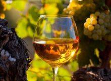 MyFrenchLife™ – MyFrenchLife.org – sauternes wine - wine glass