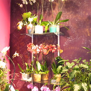MyFrenchLife™ - florists in Paris - Rêve